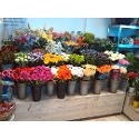 Bloemenshop Rozeneiland
