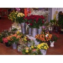 Blumenladen famila bad segeberg