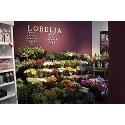 Bloemenhuis Lobelia