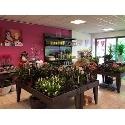 RoZus bloemen en planten