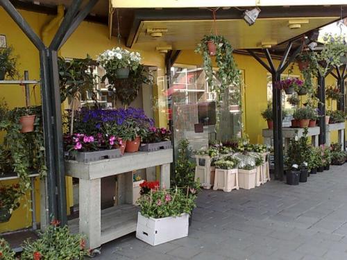 Bloemist Groningen Bloemenhuis Jan Schuiten B.V.