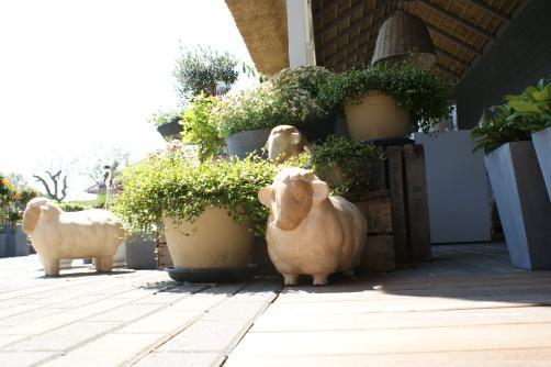 Schattige schaapjes