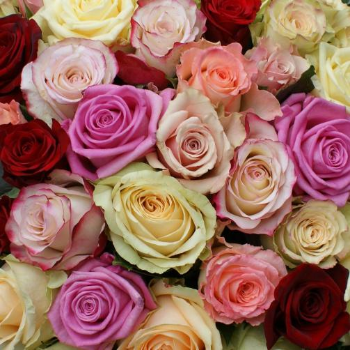 Gemengde rozen.