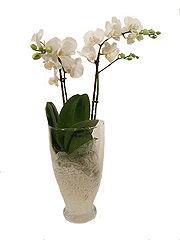 Danny's bloemen en kadoshop