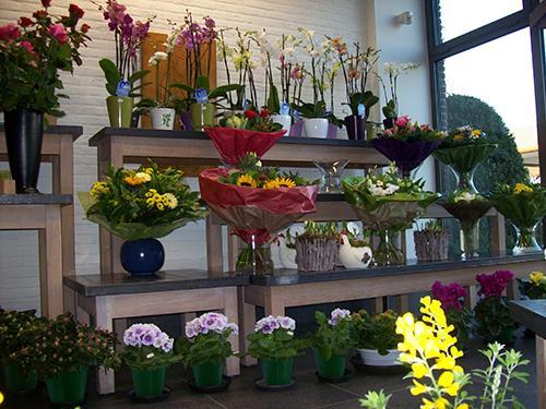Foto binnenkant bloemenwinkel Adriaenssens Bart