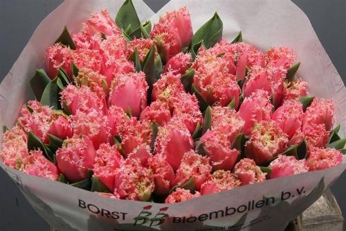 Bloemen Vink Voorthuizen