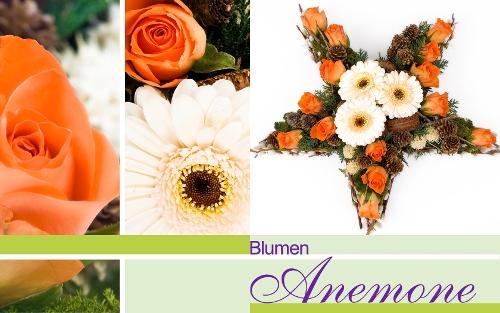blumen anemone besorgt blumen und str u e in m nchen regionsflorist. Black Bedroom Furniture Sets. Home Design Ideas