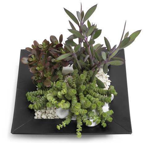 Kamerplanten soorten vetplanten