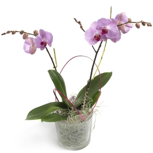 Pink orchid in glass jar