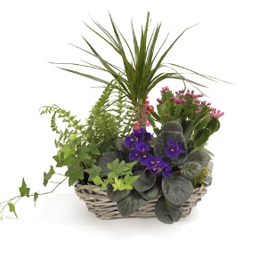 a garden in basket