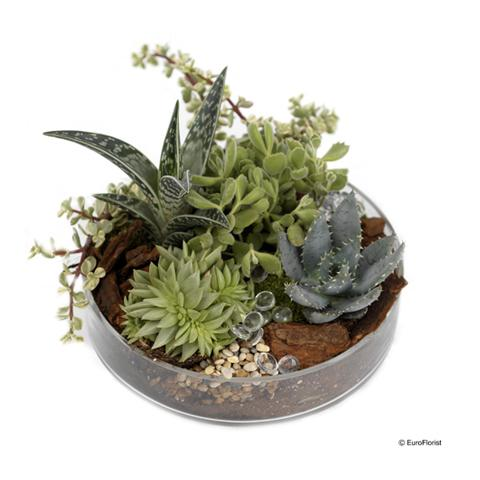 Composition de plantes 2 composition de plantes 2 for Commander des plantes