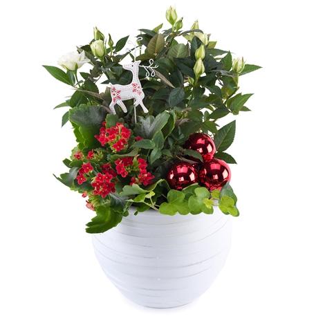 weihnachtsgeist weihnachtsgeist bestellen und liefern ber regionsflorist. Black Bedroom Furniture Sets. Home Design Ideas