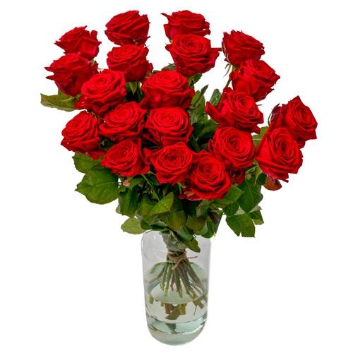 20 Rote Rosen - Premium Red Naomi