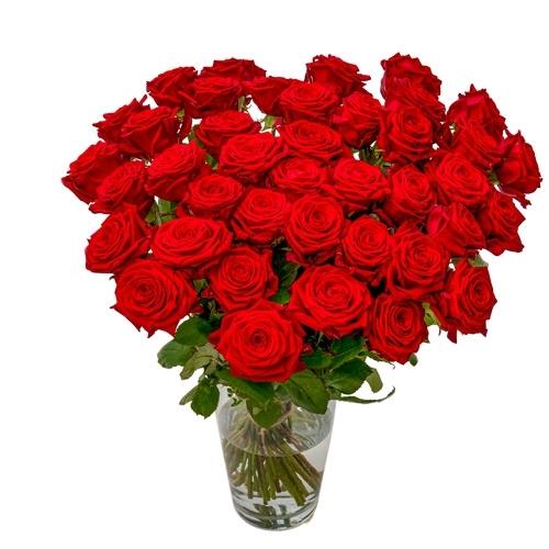 40 Rote Rosen - Premium Red Naomi
