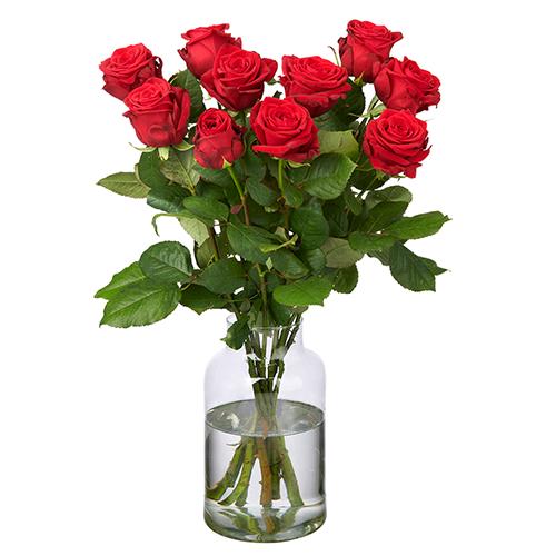 10 Rote Rosen - Premium Red Naomi