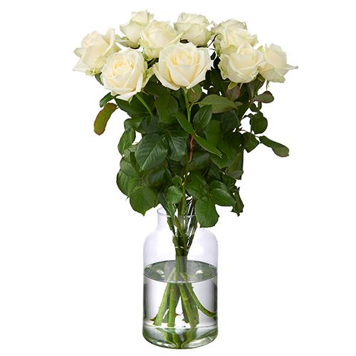 10 Weiße Avalanche Rosen Premium