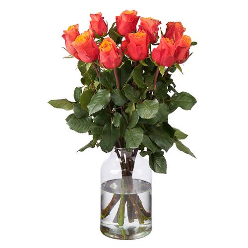 10 Orange Rosen Premium