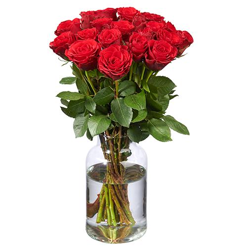 20 Rote Rosen (50 cm Premium)
