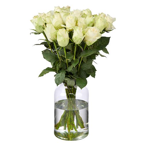 20 Weiße Rosen (50 cm Premium)