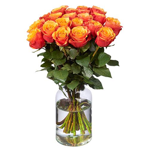 20 Orange Rosen (50 cm Premium)