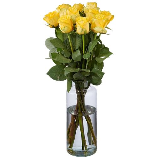 10 Gelbe Rosen Premium
