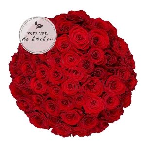 50x Red Naomi Rozen