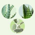 Planten vetpakket
