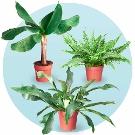 Tropische Plantenpakket