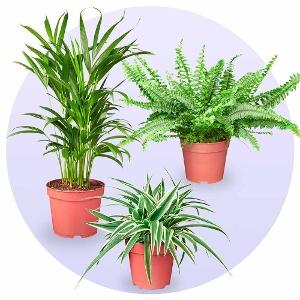 Green Heart Plantenpakket