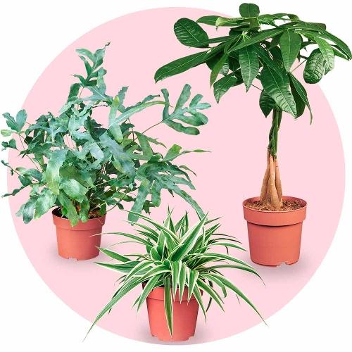 Easy Air Plantenpakket
